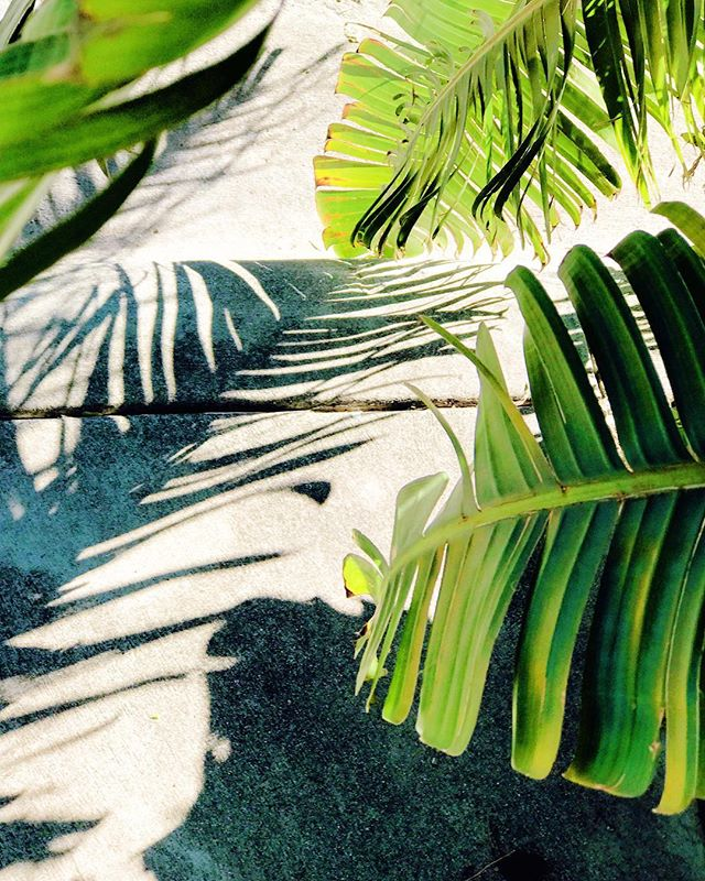 Positive and purposeful // #palma #shadowobsessed #miami