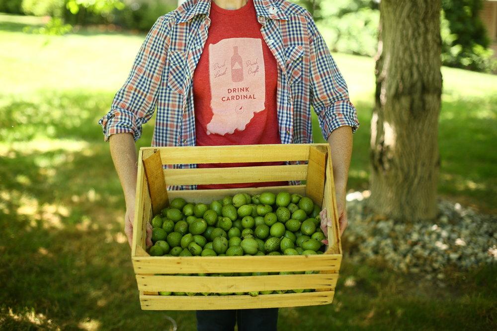GreenWalnuts-Nocino.jpg