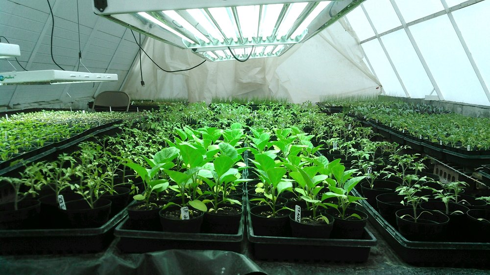 — A GREENHOUSE ON THE FARM GETS PLANTS A HEAD-START —
