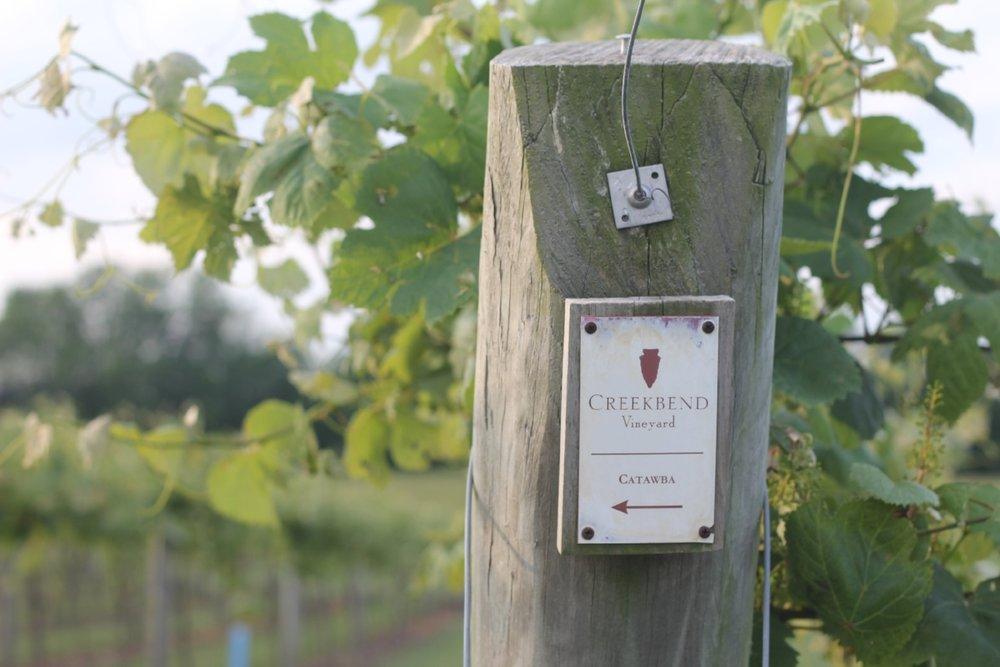 Catawba-Spring-Vines.JPG