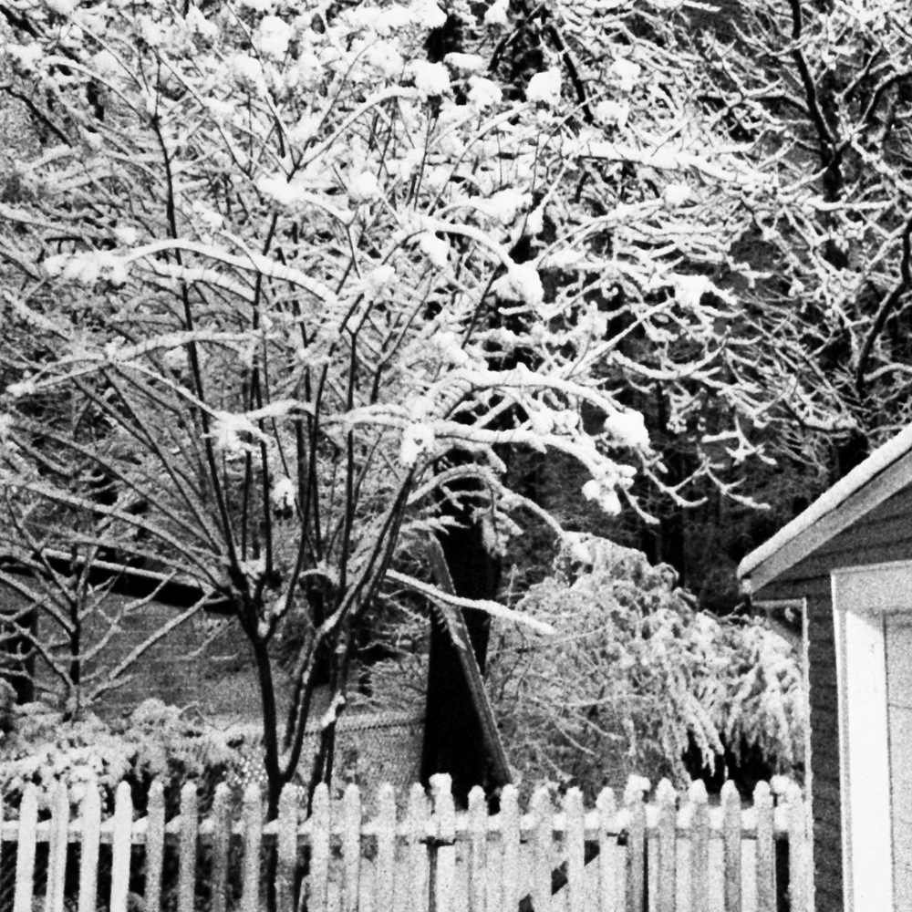 Snow in our backyard last night.