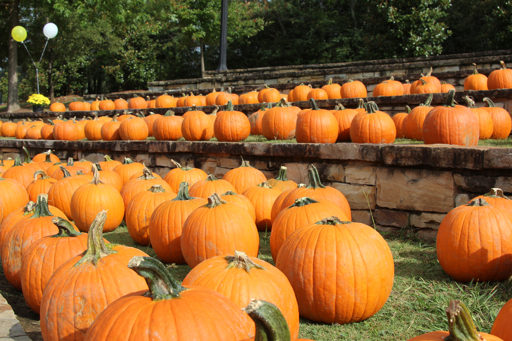That time we sold over 600 pumpkins at the Pumpkin Festival and doubled our fundraising goal!