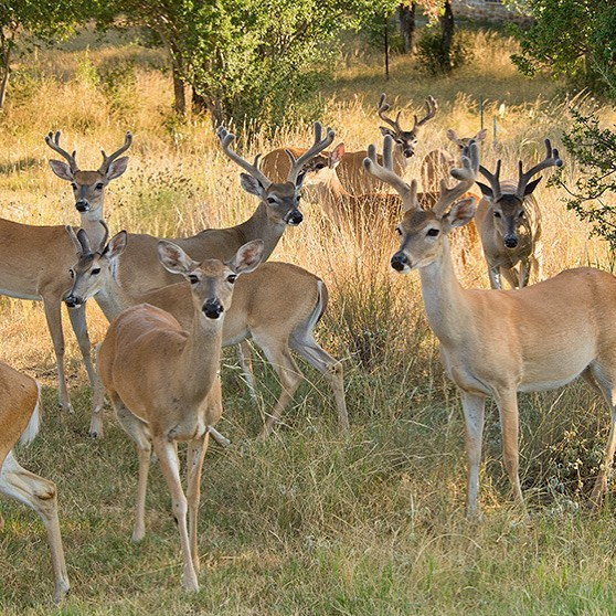 Nestled among 550 acres, you'll find home sites on Lake LBJ surrounded by dedicated open spaces. We have preserved the natural habitat so you can enjoy the very best of Horseshoe Bay. . . . #texas #texashillcountry #lakelbj #lakelbjrealestate #horseshoebay #horseshoebaytexas #nature #naturalhabitat #deer #privatecommunity #trailsofhorseshoebay
