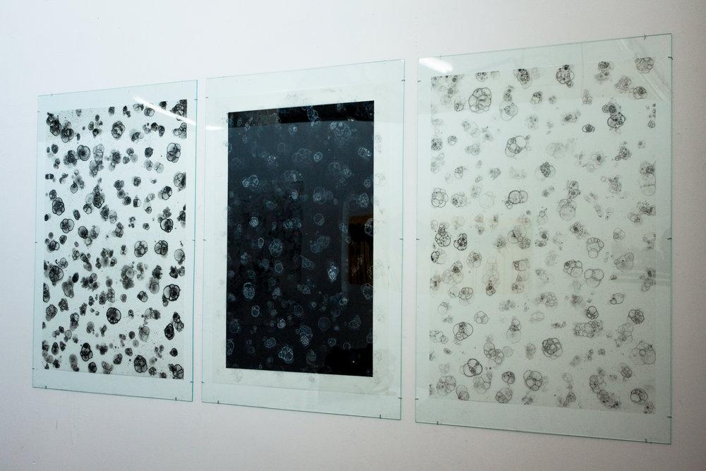 Portholes (3)