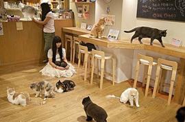 tvrh cat cafe
