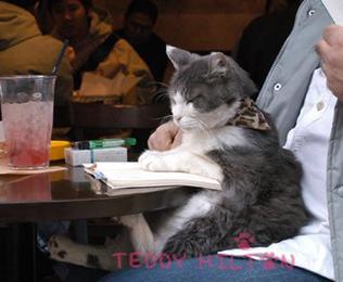 tvrh cafe cat