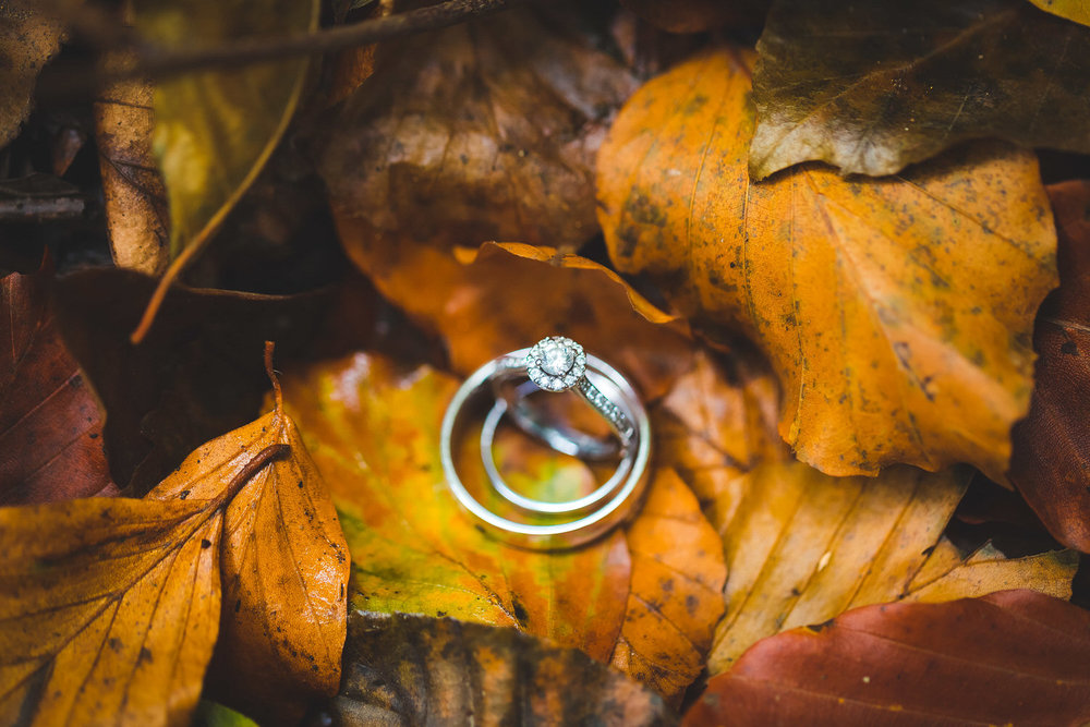 wedding rings in autumnal leaves