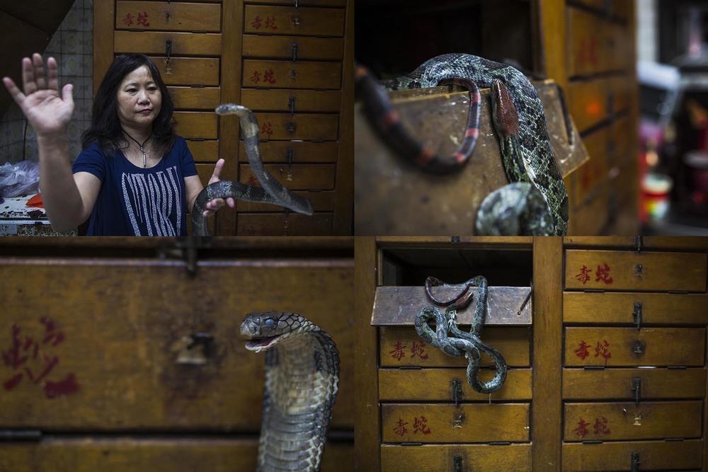 Snake02.jpg