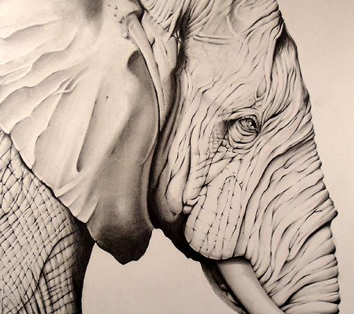 elephantTN-Left.jpg
