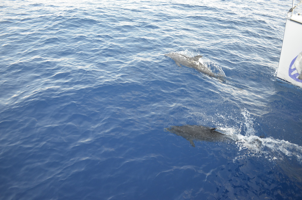 Dolphins dancing on the bow.