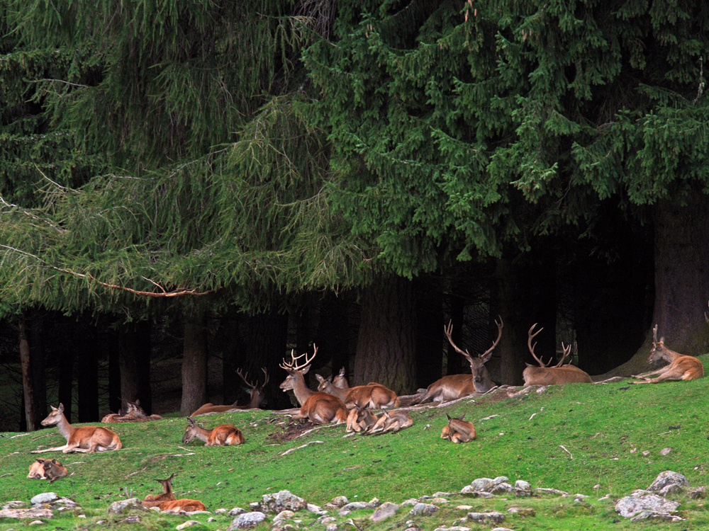 Foresta demaniale di Paneveggio