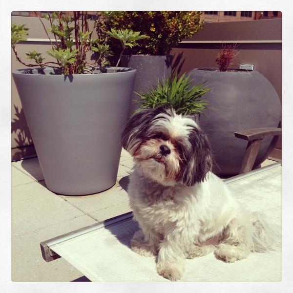 Buddy enjoying the weather.