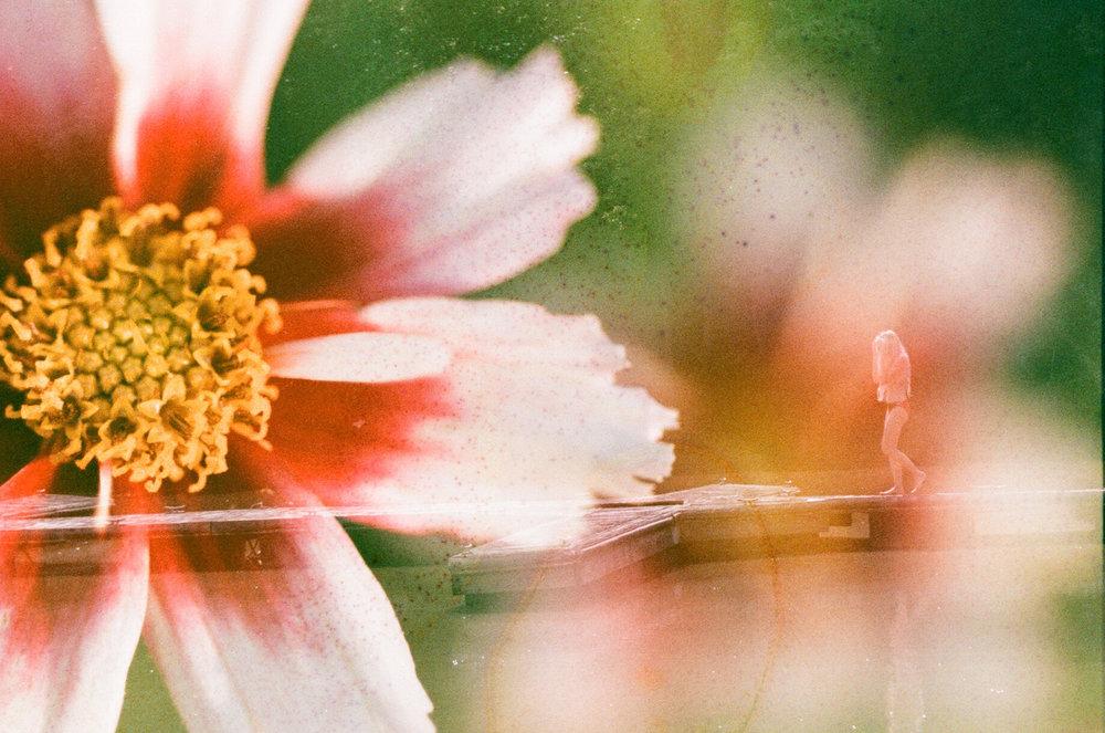 flower778.jpg