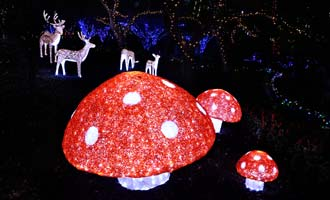 hunter-valley-christmas-lights.jpg