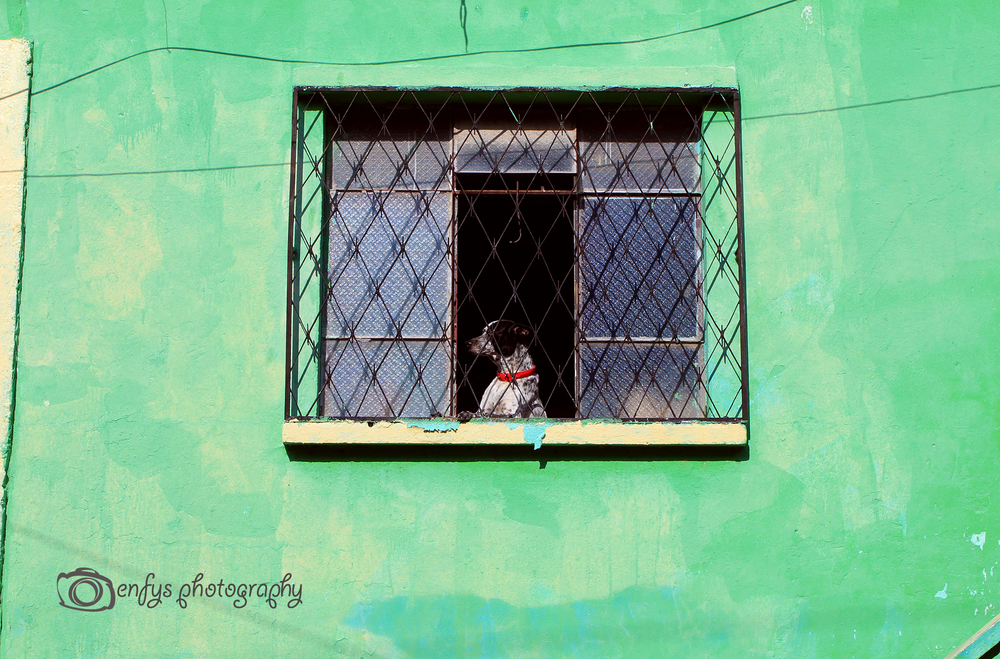 Dog in a window of a home -Flores, Guatemala