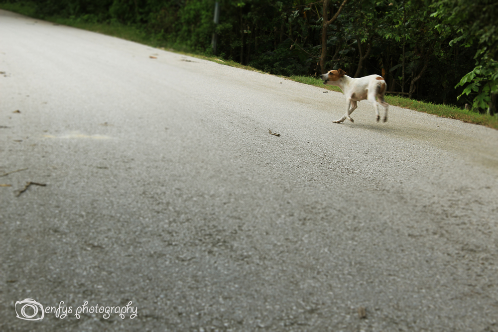 The closest I was able to get to any of the dogs in El Remate. Such a scared pup running away with her tail between her legs.  -El Remate, Guatemala