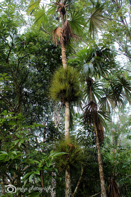Moss Trees -Tikal National Park, Guatemala