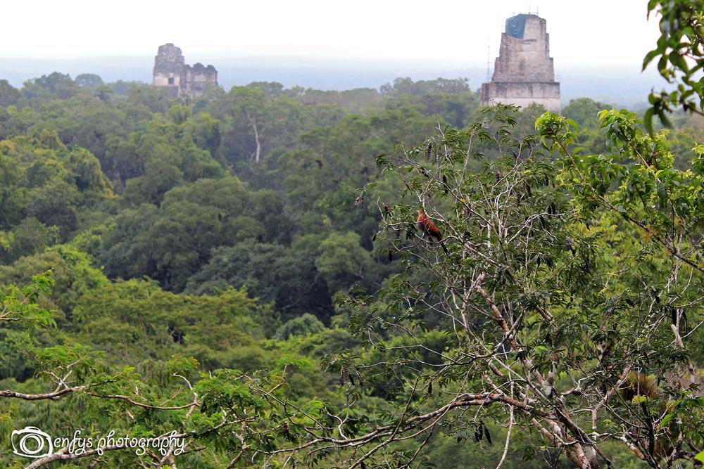 A splash of red -Tikal National Park, Guatemala