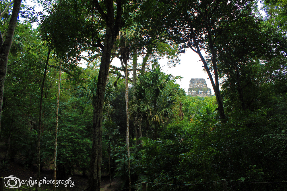 The top of Temple Four, through the trees  -Tikal National Park, Guatemala
