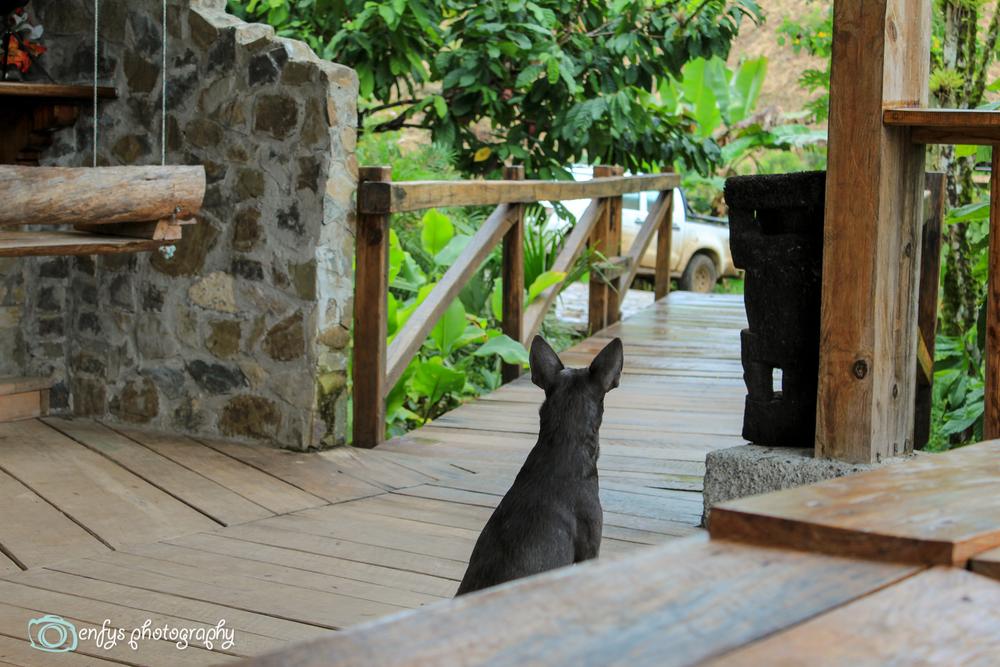 Shadow the guard  -  Utopia Eco Hotel- Alta Verapaz, Guatemala
