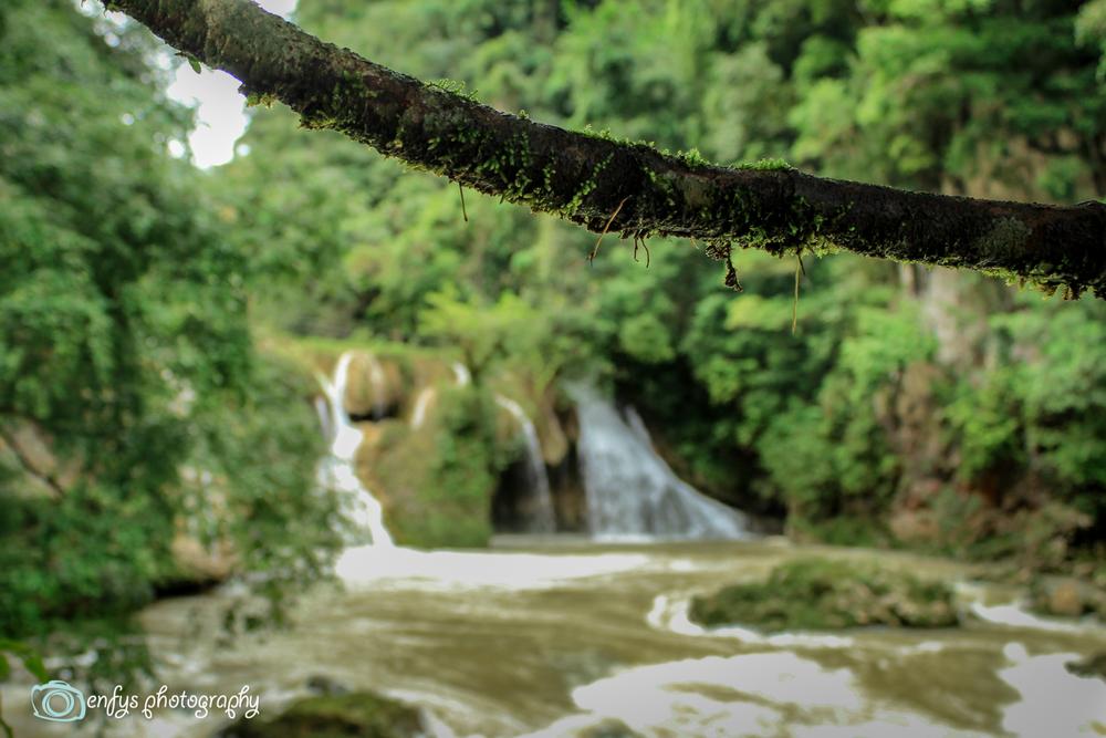 Moss was everywhere in Guatemala  -Semuc Champey, Guatemala