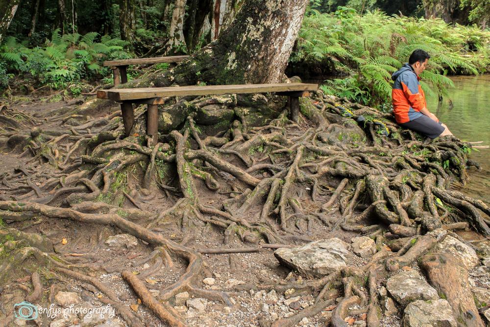 Roots -Semuc Champey, Guatemala