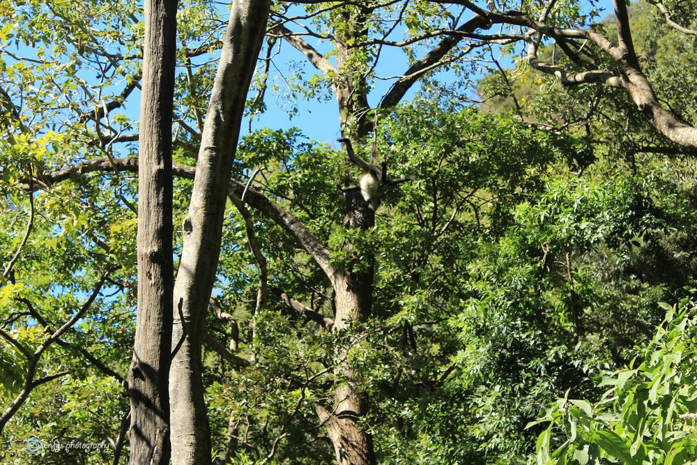 (Click to enlarge) -Atitlan Nature Reserve - Panajachel, Guatemala