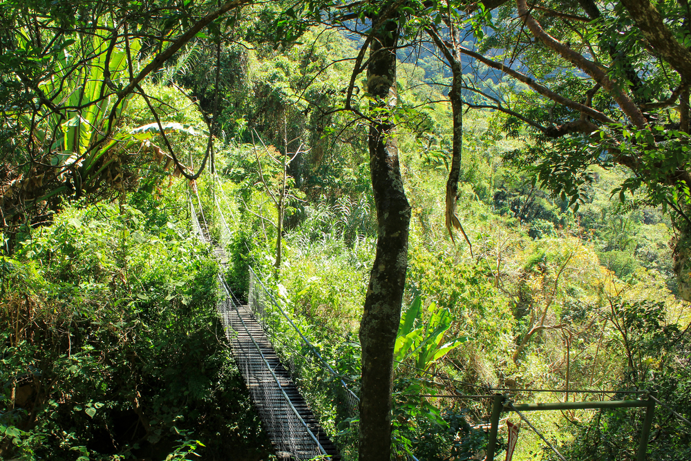 Many of the bridges were very old, rickety and had plant overgrowth, which added to the adventure!  -Atitlan Nature Reserve, Panajachel, Guatemala