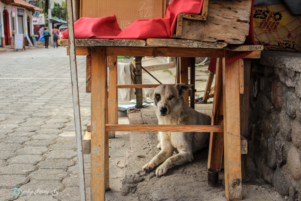 Street dog taking a rest in the shade -Panajachel, Guatemala