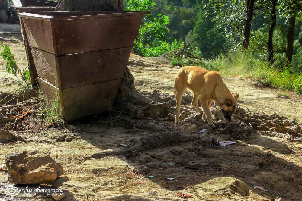 Scavenger at Pascual Abaj  -Chichicastenango, Guatemala