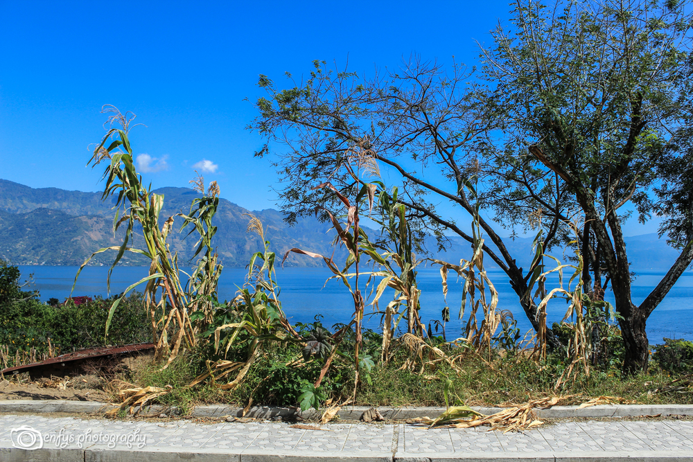 Roadside view of Lake Atitlan  - San Pedro La Laguna, Guatemala