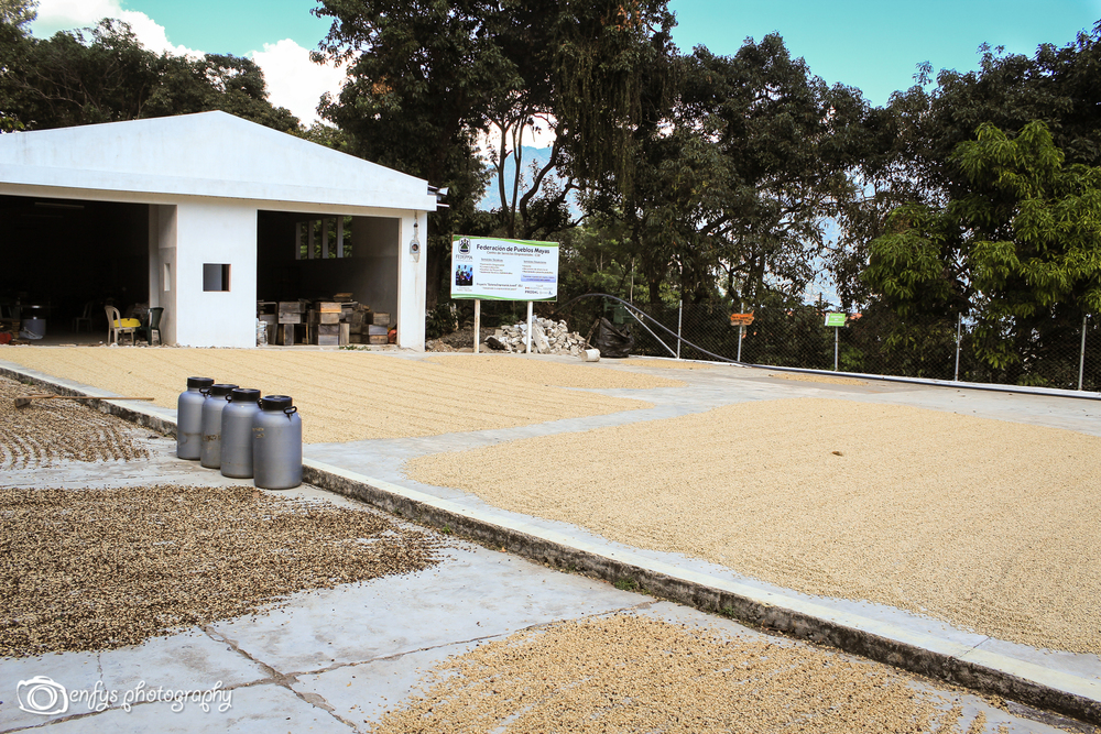 Fedepma Coffee Plantation -San Pedro la Laguna, Guatemala