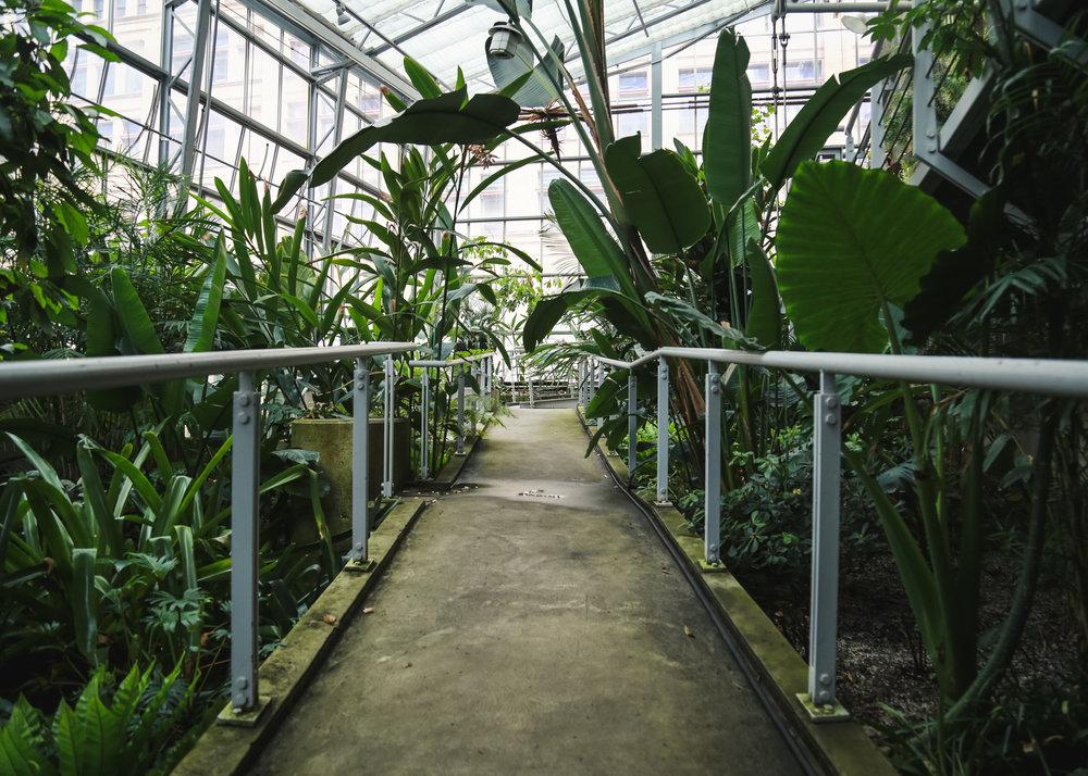 Edie - Cloud Garden-13.jpg