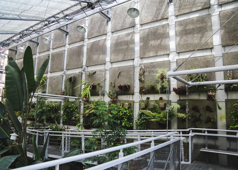 Edie - Cloud Garden-21.jpg