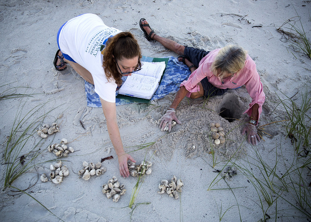 - Maura Kraus and Maddy Kenton count the hatched eggs while excavating a nest on Saturday, July 15, 2017 along the beach in Downtown Naples.