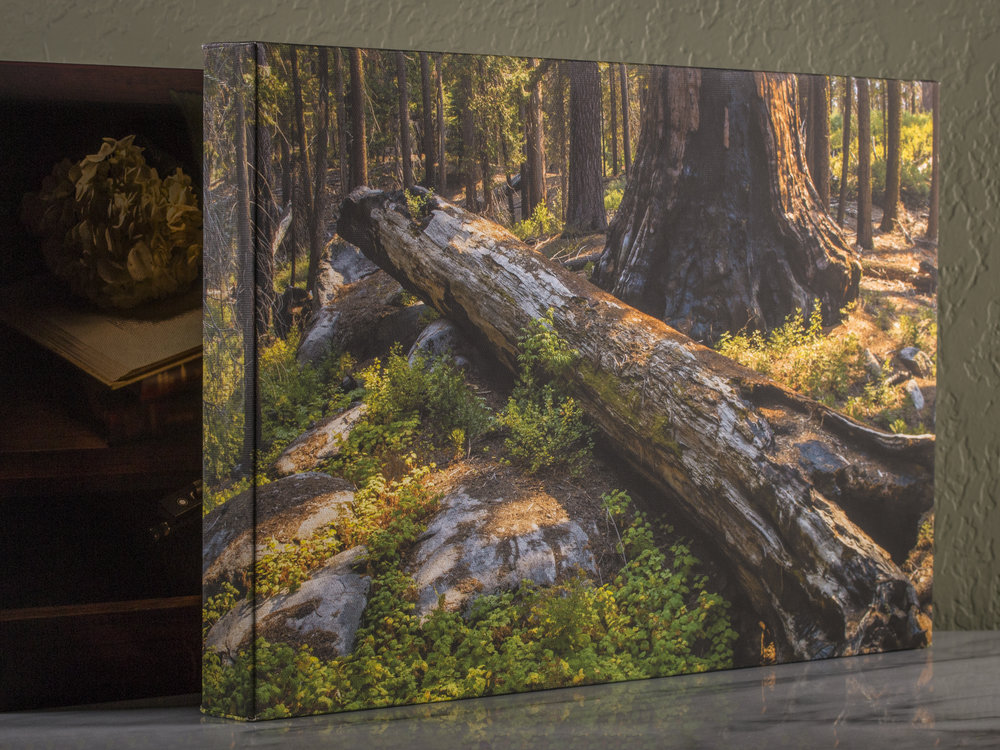Redwoods Photo Canvas Print
