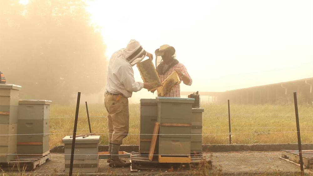 ballard bee.jpg