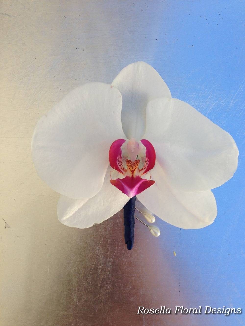 Buttonhole orchid.jpg