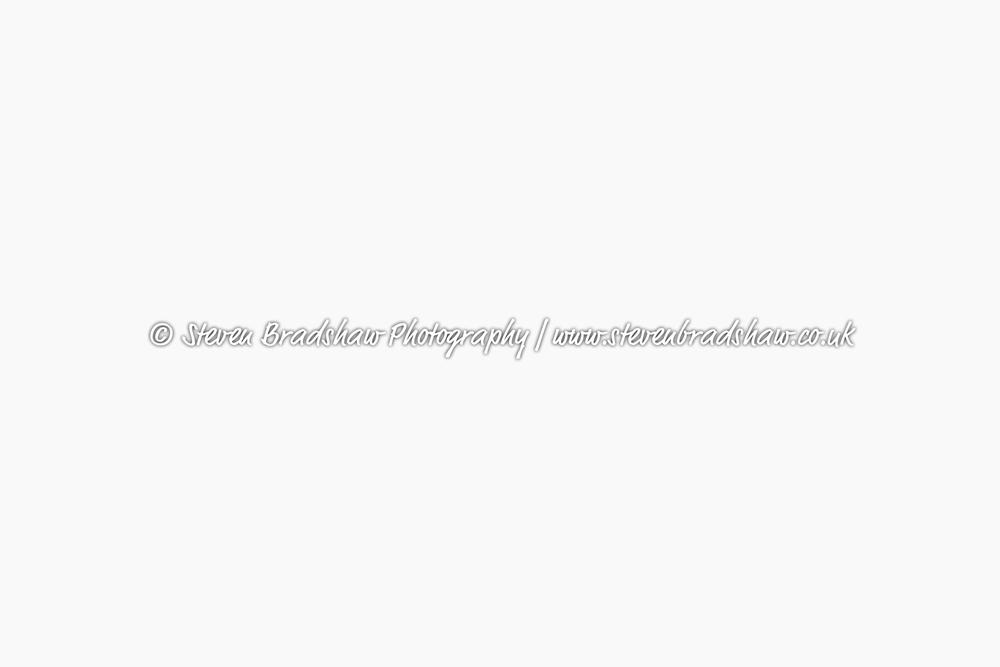Bloglogo-2.jpg