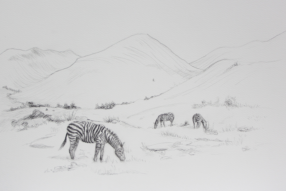 Zebras in the Highlands