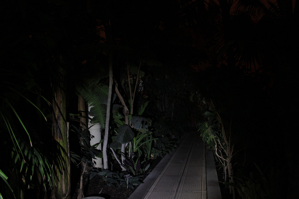 Night in the Great palm house, Glasnevin