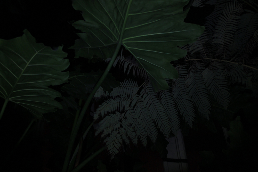 Detail of Night in the Great Palm House