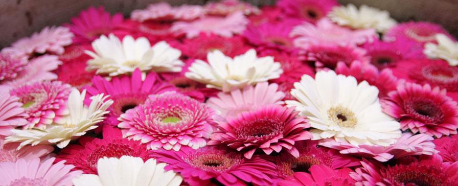 thai-flowers-896x.jpg