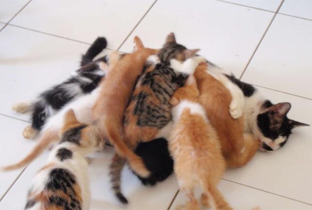Estebel nursing many adopted kittes