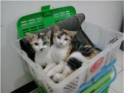 twin+in+basket.jpg