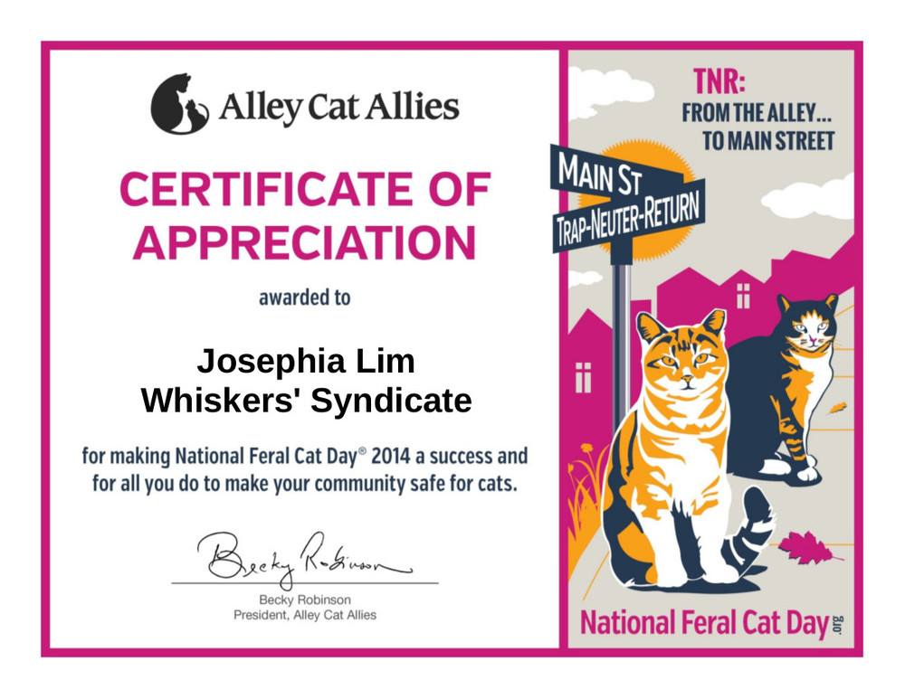 whiskerssyndicate-alley cat national feral day