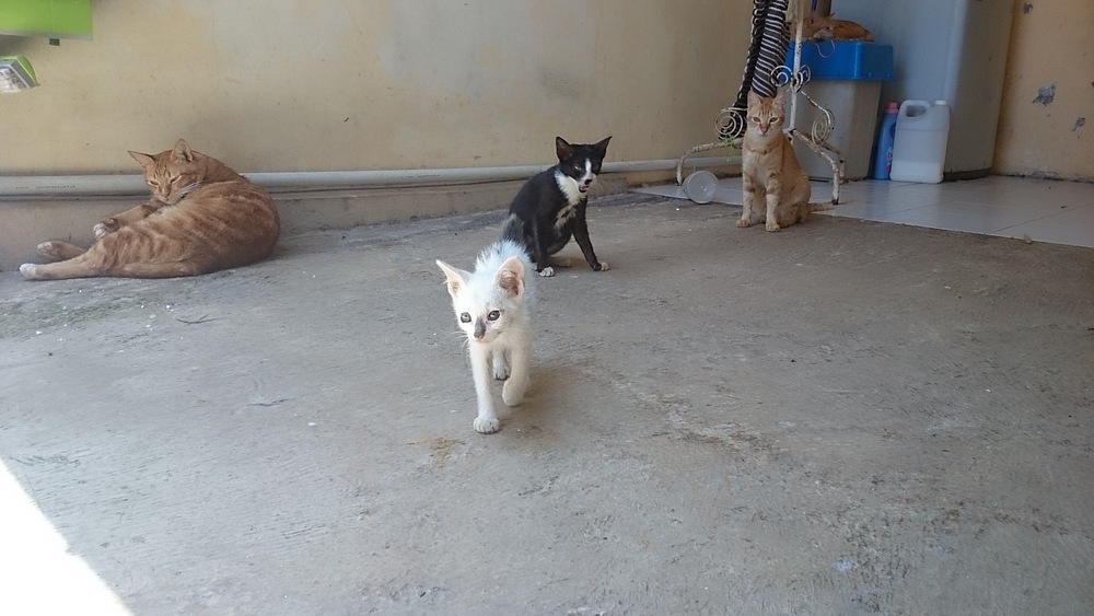 At home right away. She went around sniffing Rexie II (on the left hand), Sam (tuxedo) and Goldie (looking at camera). Then walk away like a champion