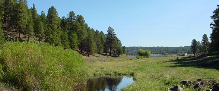 This is Pumphouse County Natural Area in Kachina Village.  Learn more about it on Coconino County's website.