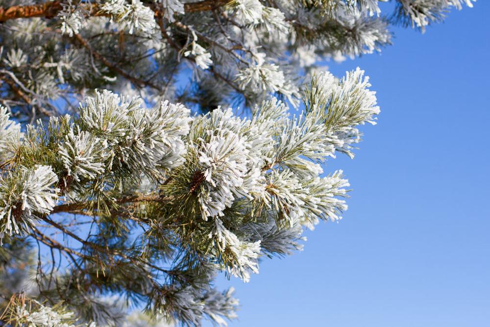 20141223 Saskatoon Christmas 2014 LJ 0181.jpg