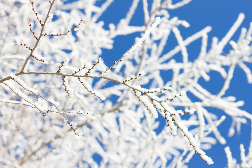 20141223 Saskatoon Christmas 2014 LJ 0257.jpg